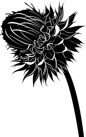 bloom: thistle. milk thistle flower in bloom in spring vector black silhouette isolated on white background