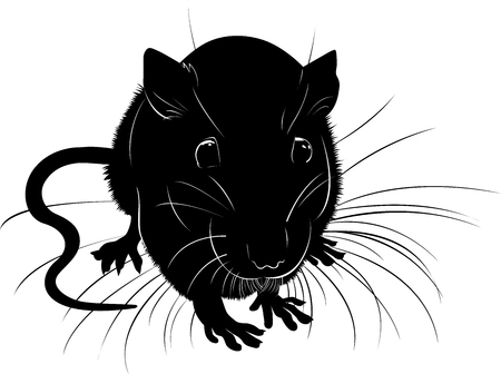 rats. rats animal vector black silhouette on a white background Illustration