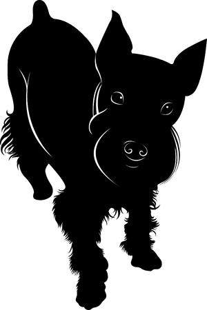 schnauzer: miniature schnauzer miniature dog Illustration