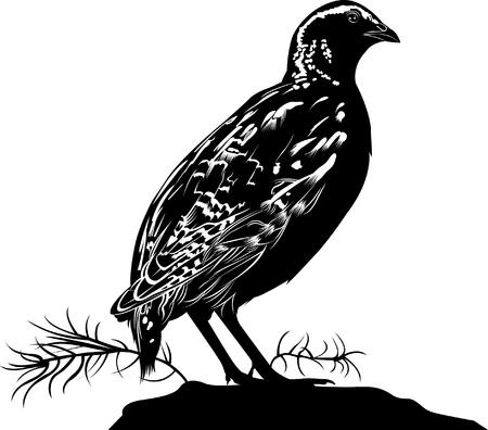 Quail. bird quail. Vector silhouette of standing Common quail. Ilustração