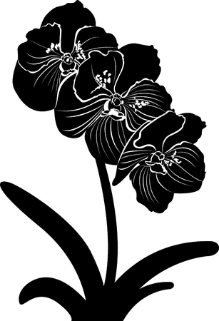 orchids. orchid flower branch vector isolated Illustration