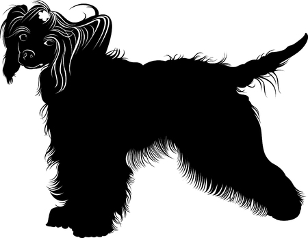 Chinese Crested dog. dogs. chinese crested breed, black and white vector picture isolated on white background