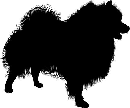 Black silhouette of spitz. Vector. Isolated on white background. Spitz dog Illustration