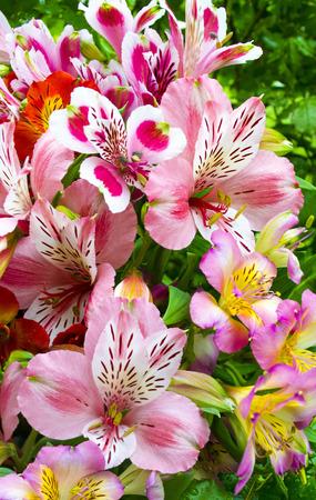 Bouquet of flowers. Alstroemeria. Bouquet of flowers Alstroemeria. Flowers Alstroemeria.