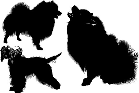 Black silhouette of spitz. Vector. Isolated on white background. Spitz dog. Chinese Crested dog. Dogs. Chinese crested. Collection of dogs Vetores
