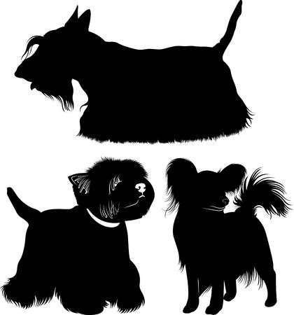 West Highland White Terrier. Dogs. papillon dog. Scotch Terrier. Vector Illustration