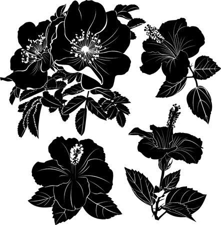 Hibiscus. Karkade. Hibiscus flower. Rosehip branch. Flowers of dog-rose
