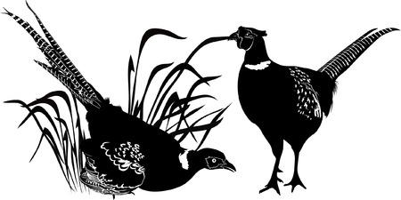 bird vector illustration
