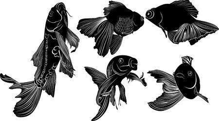 goldfish carp. goldfish carp vector isolated on white background Vectores