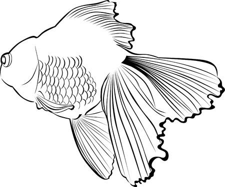 Goldfish carp illustration. Illustration