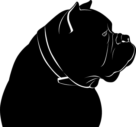 Cane Corso dog portrait vector illustration.