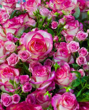 Blumenhintergrund von Rosen Standard-Bild