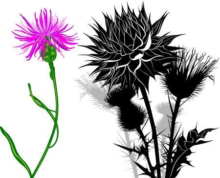 milk thistle flowers isolated on white background Illustration
