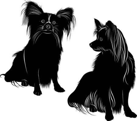 vector silhouette of the dog breed Papillon Butterfly