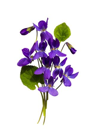 bouquet of flowers violets isolated on white background