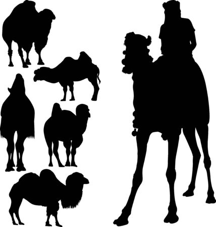 set animals camels rider vector isolated on white background