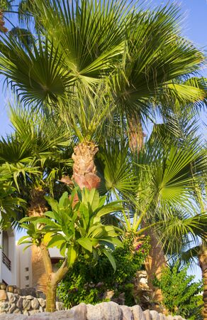 beautiful palm grove background oasis africa