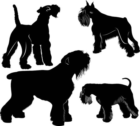 vector schnauzers and fox terrier dogs collection. Vector dogs set Illustration