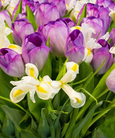 festive bouquet of purple tulips and irises. floral background tulips and irises