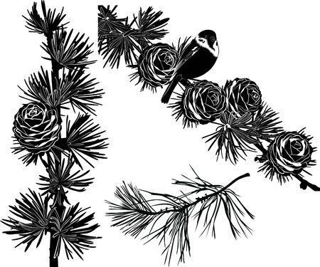 Set of silhouettes of fir branches with cones. vector fir branch collection