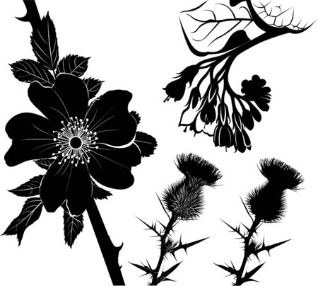 collection of flower silhouettes of medicinal plants comfrey, milk thistle, rose hip Ilustracja