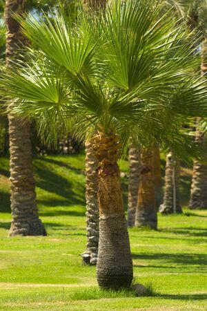 palm alley. palm plant close up
