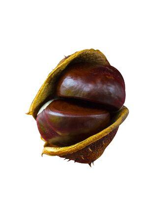 chestnut fruits on isolated on white background. fruit chestnut closeup Zdjęcie Seryjne