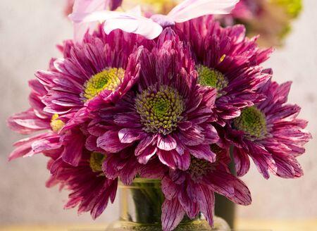 bouquet of red chrysanthemum flowers Zdjęcie Seryjne