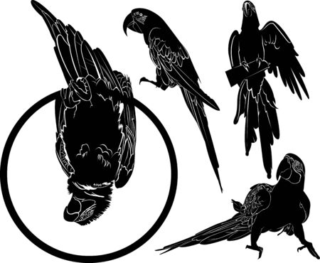 vector silhouettes of parrots birds collection 矢量图像