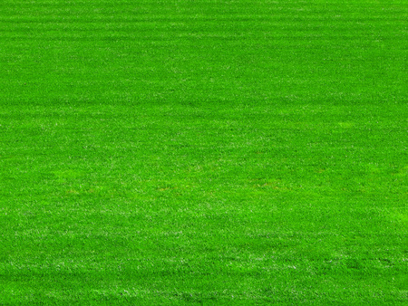 green grass on the football field background.