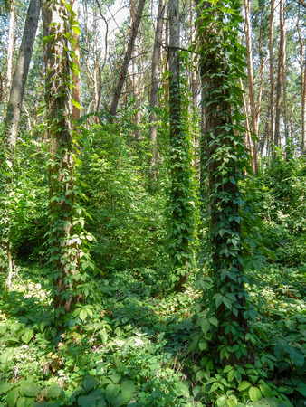 thick green forest with sunny bright rays through the eyelids