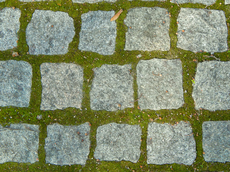 brick pavement with moss in the mortar
