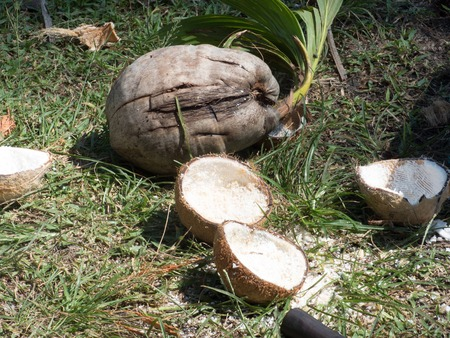 pitched: Coconuts open
