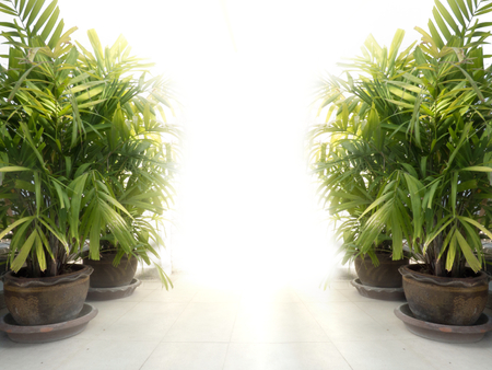 radiantly: plants garden concept copy space background Stock Photo