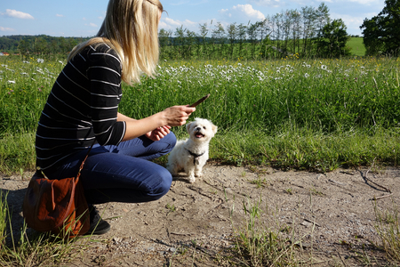 Young woman playing with her dog in nature with stick Stock Photo