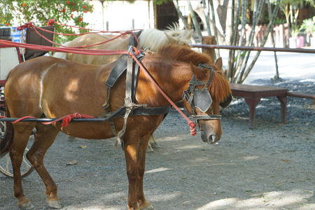 Horse-drawn carriage Reklamní fotografie