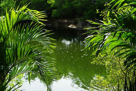 tropical green forest with palm trees and water in Thailand Banco de Imagens