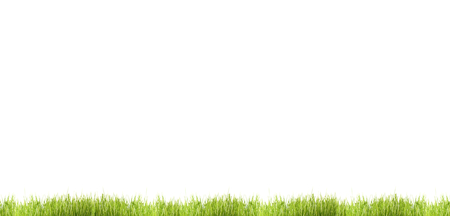 green grass meadow blades of grass isolated lawn 3d illustration Reklamní fotografie