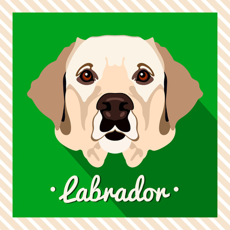 golden retriever puppy: Vector portrait of a labrador dog. Symmetrical portraits of animals. Vector Illustration, greeting card, poster. Icon. Animal face. Font inscription. Image of a dogs face.