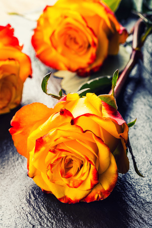 Rose. Orange rose. Yellow rose. Several orange roses on Granite background