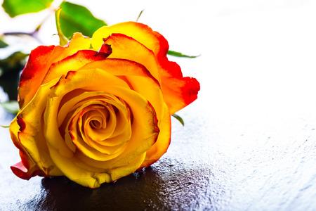 rosas naranjas: Varias rosas de color naranja sobre fondo Granito Foto de archivo