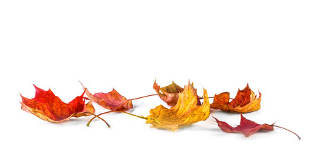 Autum banner with colorful fall leaves falling down from tree. Isolated on white. Фото со стока