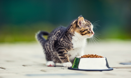 granules: Cat. Cute little kitten with a bowl of granules at home or in the garden. Stock Photo