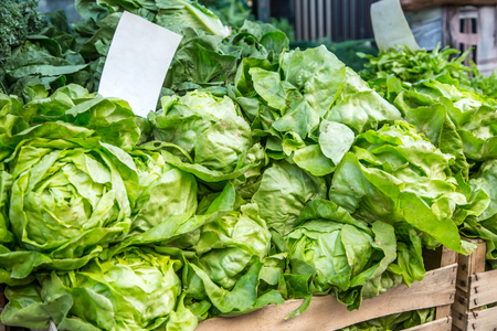 pike place: Green lettuce salad on the farm market in the city. Fruits and vegetables at a farmers market.