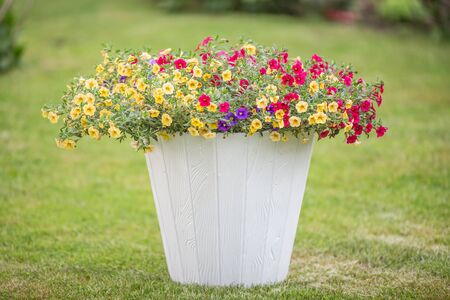 White flowerpot with colorful small flowers on a green freshly cut grass.