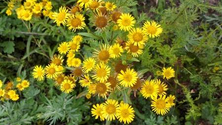 fiori di campo: Fiori