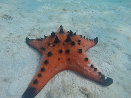 ko: Thailand Ko Mak Coral Reef Red Seastar Fish