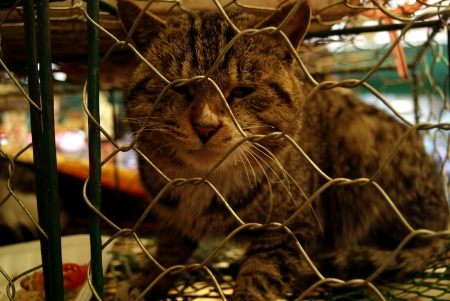 The cat  photo