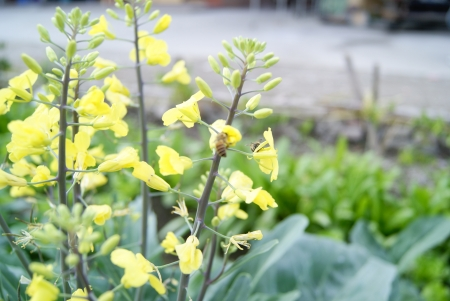 constitute: Vegetables flowers and bees