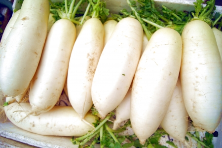 Radis blanc Banque d'images